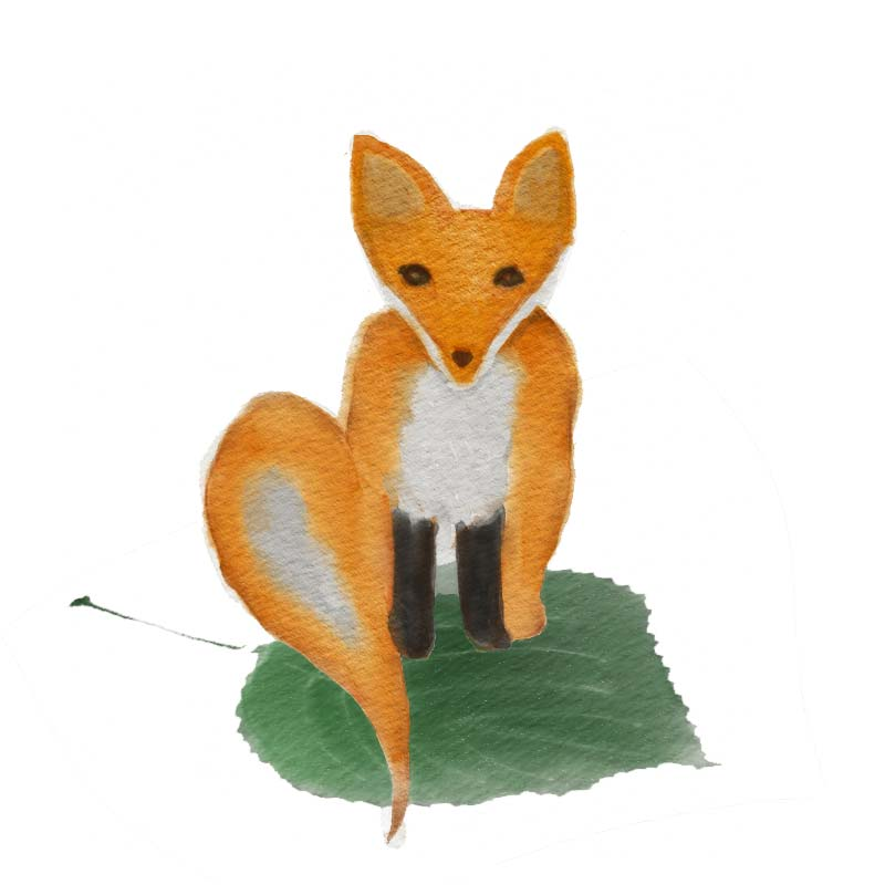 fox-on-leaf