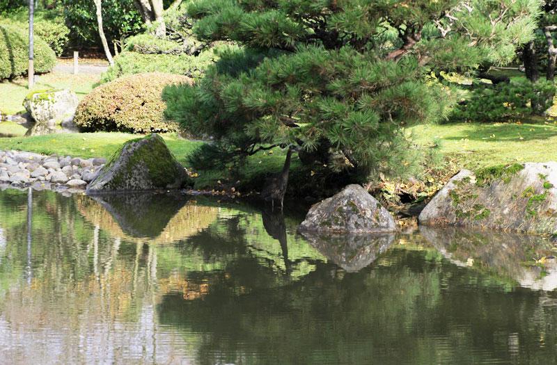 japanese-garden3